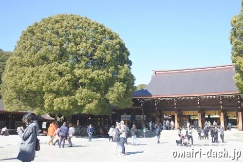明治神宮(東京都渋谷区)の社殿と夫婦楠