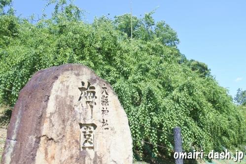 大縣神社(愛知県犬山市)梅園
