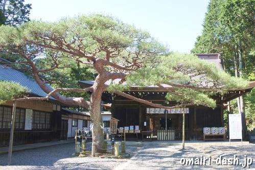 尾張冨士大宮浅間神社(愛知県犬山市)えんむすびの松