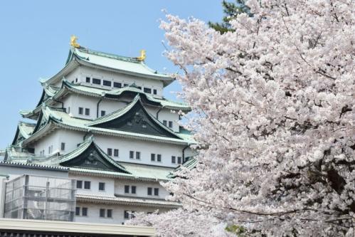 名古屋城(名古屋市中区)と桜