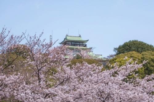小牧山城と桜