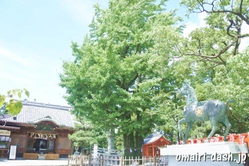 大垣八幡神社(岐阜県大垣市)夫婦銀杏(御神木)