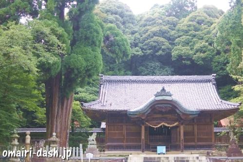 伊富岐神社(岐阜県不破郡垂井町)拝殿と大杉(御神木)