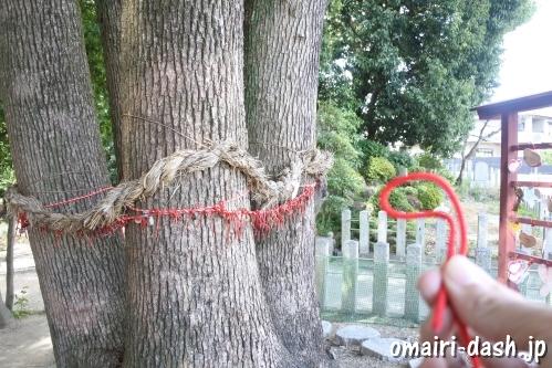 渋川神社(愛知県尾張旭市)連理木(御神木)と赤い糸