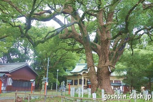 鳴海八幡宮(名古屋市緑区)楠の木
