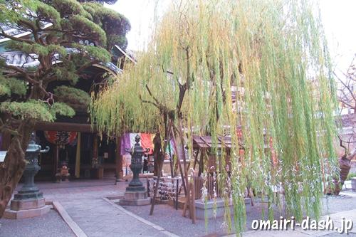 縁結びの六角柳(京都六角堂頂法寺)