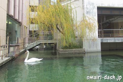 白鳥(京都六角堂頂法寺)