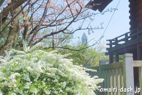 千代保稲荷神社名古屋支所(名古屋市千種区)花と東山スカイタワー