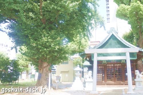 金山神社(名古屋市熱田区)社殿と御神木