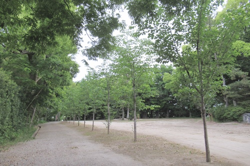 小垣江神明神社(愛知県刈谷市)参道の桜若木