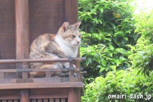 大仙山西福寺(愛知県刈谷市)猫