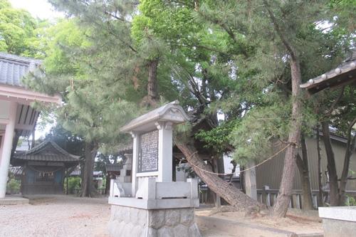小垣江神明神社(愛知県刈谷市)親子松