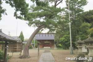 一ツ木神明社(愛知県刈谷市)参道の松の木