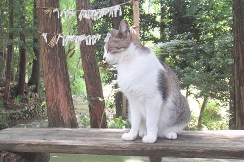 玉野御嶽神社(愛知県春日井市)猫