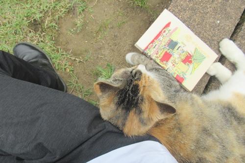 玉野御嶽神社(愛知県春日井市)猫と御朱印