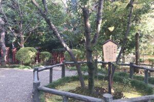 乃木公園(東京都港区)月桂樹
