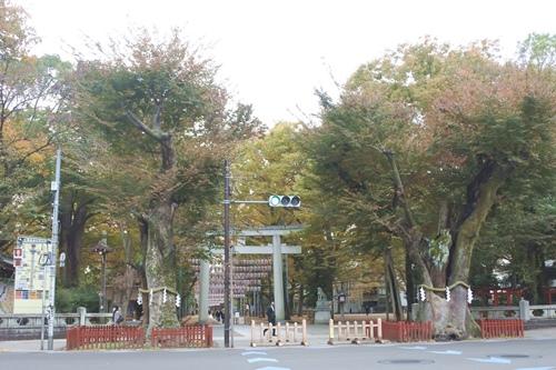 大國魂神社(東京都府中市)大鳥居・ケヤキ