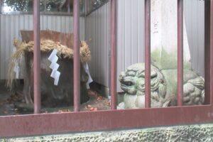 岩塚七所社(名古屋市中村区)神木ナギの木