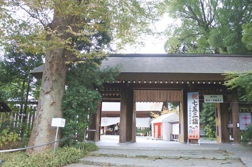 阿佐ヶ谷神明宮(東京都杉並区)夫婦けやき(縁結び)
